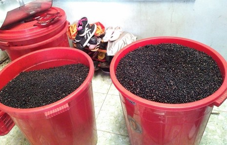 Xưởng cà phê toàn đậu nành và hóa chất - ảnh 2