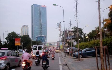 Hàng cây mỡ trên đường Nguyễn Chí Thanh - Hà Nội chết khô  - ảnh 1