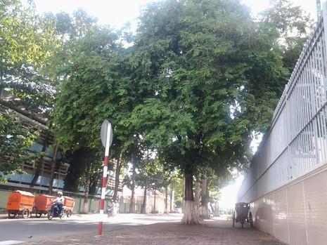 Bình yên ở con đường ngắn nhất Biên Hòa - ảnh 3