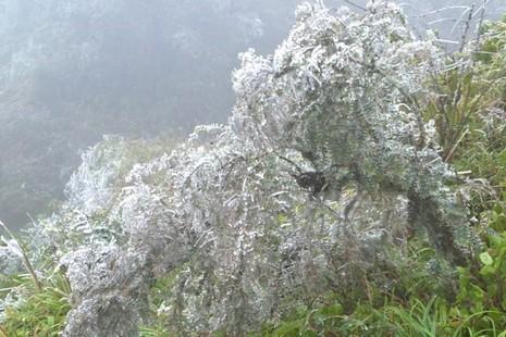 Băng đóng dày trên nền nhiệt 1,4 độ C tại huyện Sa Pa - ảnh 1