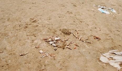 Cá biển tiếp tục chết, ngư dân Quảng Bình điêu đứng - ảnh 3