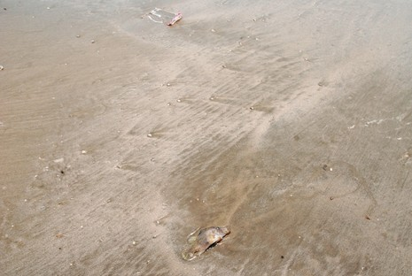 Cá biển tiếp tục chết, ngư dân Quảng Bình điêu đứng - ảnh 6