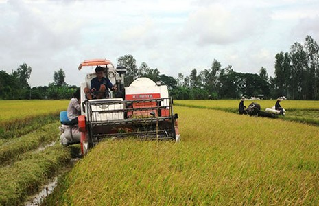 Gạo Việt Nam: Giá rẻ vẫn khó bán  - ảnh 1