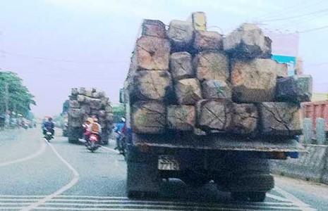 Kiểm lâm nhiều lần giải cứu gỗ lậu  - ảnh 1