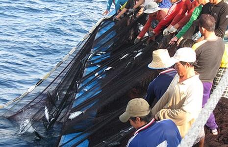 Xuất hiện 'cò tàu cá' lừa ngư dân - ảnh 1