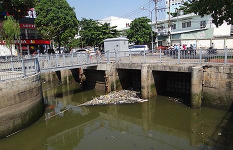 Cá chết do kênh Nhiêu Lộc - Thị Nghè quá ô nhiễm - ảnh 1