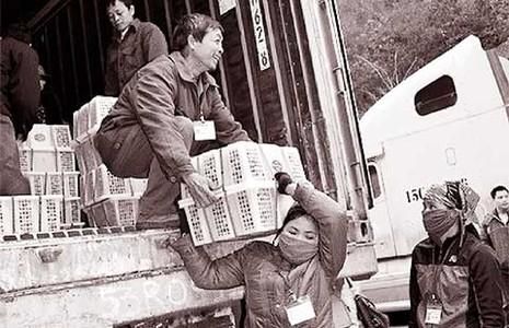 Khó giảm phụ thuộc kinh tế vào Trung Quốc - ảnh 1