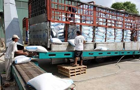 Xuất khẩu gạo sang TQ như 'đánh bạc' - ảnh 1