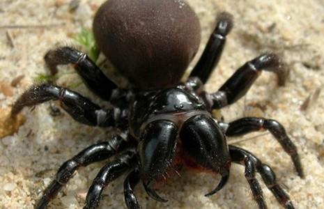 Nhiều loài nhện quý hiếm được phát hiện tại Úc và Ấn Độ - ảnh 1