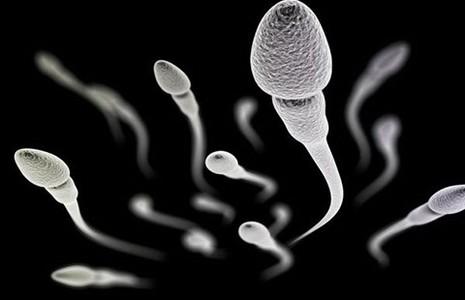 Tác dụng tránh thai cho nam của thuốc ức chế miễn dịch - ảnh 1