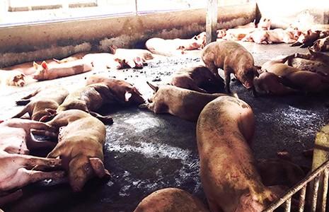 Thịt, rau chứa đầy hóa chất, kháng sinh - ảnh 1
