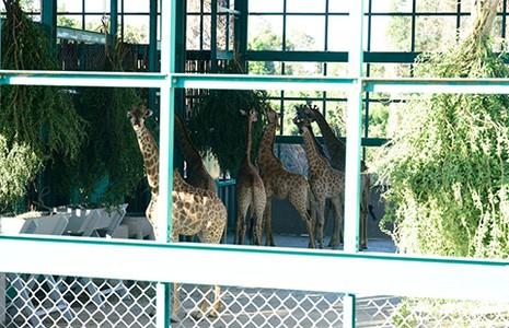 Vinpearl Safari Phú Quốc đón 200 thú quý hiếm - ảnh 1