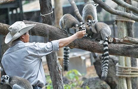 Safari vườn thú hấp dẫn nhất Việt Nam - ảnh 5