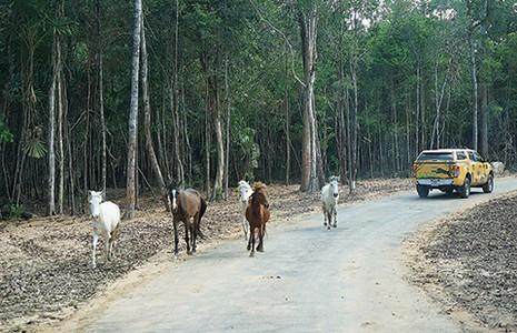 Safari vườn thú hấp dẫn nhất Việt Nam - ảnh 1