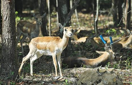 Safari vườn thú hấp dẫn nhất Việt Nam - ảnh 2
