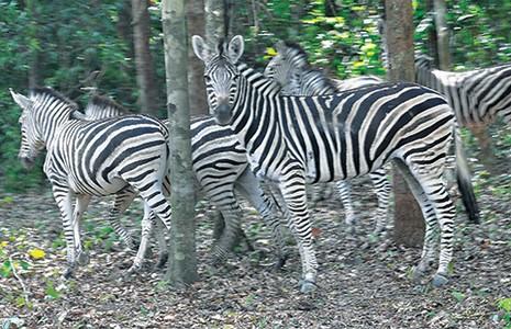 Safari vườn thú hấp dẫn nhất Việt Nam - ảnh 3