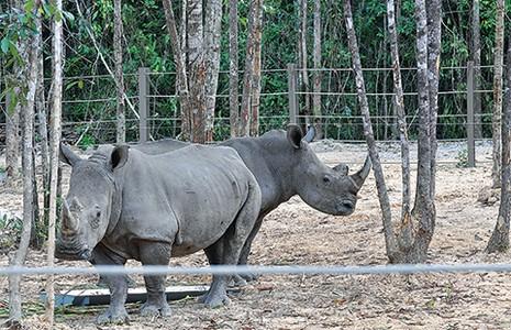 Safari vườn thú hấp dẫn nhất Việt Nam - ảnh 4
