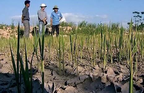 Gia Lai: Nguy cơ dân đói vì thiếu nước - ảnh 1