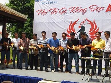 Dân chơi Sài Gòn chăm gà để thi hoa vương - ảnh 2