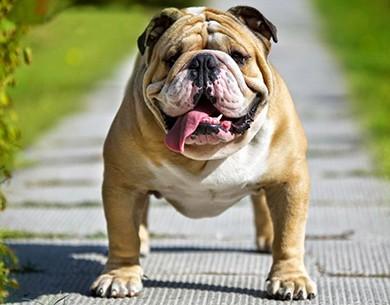 Để chó nuôi cắn người: Phải bồi thường - ảnh 4