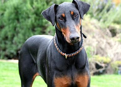 Để chó nuôi cắn người: Phải bồi thường - ảnh 3