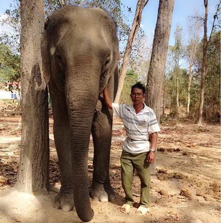 Ký sự rừng sâu - bài 3: Những 'chiến binh' giải cứu voi rừng - ảnh 1