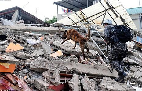Vì sao động đất mạnh ở Nhật và Ecuador?  - ảnh 1