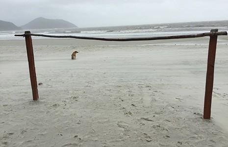 Bãi biển đẹp… để dành - ảnh 1