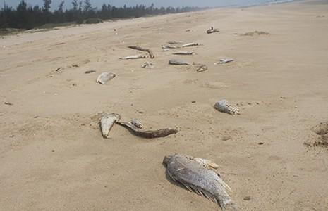 Vụ cá chết hàng loạt: Những nhận định trong thời gian qua - ảnh 1