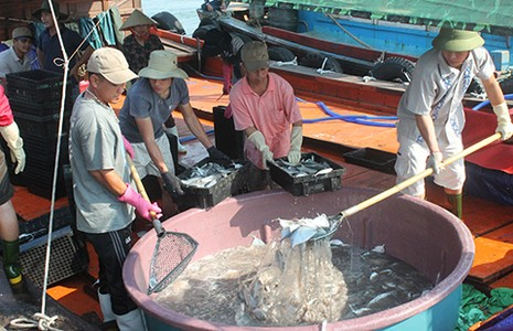 Ngư dân Quảng Bình tấp nập ra khơi - ảnh 1