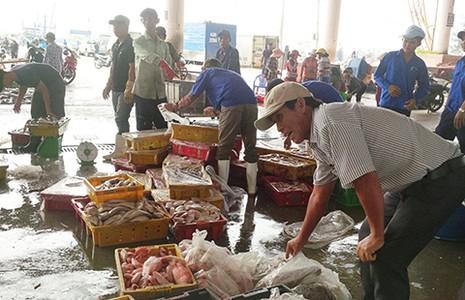 Người Mỹ, Nhật, Úc... ăn mạnh cá biển miền Trung - ảnh 1