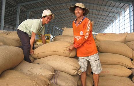 TQ siết chất lượng, gạo Việt lo lắng - ảnh 1