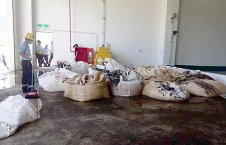 Giám đốc công ty môi trường đem chất thải của Formosa về... bón cây - ảnh 1