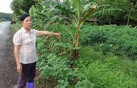 Vụ UBKT huyện ủy 'tuyên án' thay tòa: Tỉnh ủy Bình Phước sẽ vào cuộc làm rõ - ảnh 1