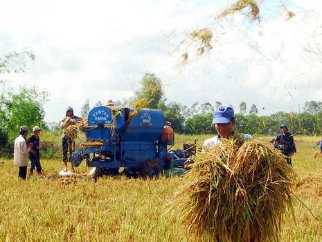 ĐBSCL đã triển khai 250.000 ha cánh đồng lớn  - ảnh 1
