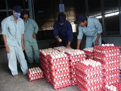 Vì sao Việt Nam phải nhập muối, trứng? - ảnh 1