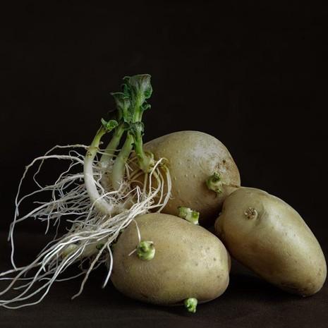 7 loại cây rau củ rất độc hại trong vườn nhà - ảnh 1