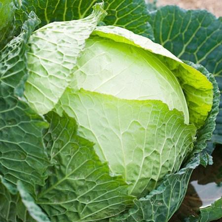 Những thực phẩm ngăn ngừa dị ứng hiệu quả - ảnh 4