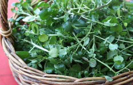 Lợi ích dinh dưỡng bất ngờ của rau cải xoong - ảnh 1