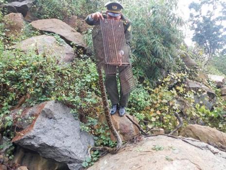 Thả trăn gấm và khỉ mắt vàng về khu bảo tồn thiên nhiên Sơn Trà - ảnh 1