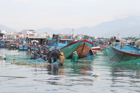 Ngư dân Hòn Rớ nô nức được mùa cá cơm - ảnh 2