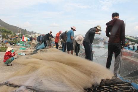 Ngư dân Hòn Rớ nô nức được mùa cá cơm - ảnh 5
