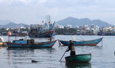Ngư dân Hòn Rớ nô nức được mùa cá cơm - ảnh 7