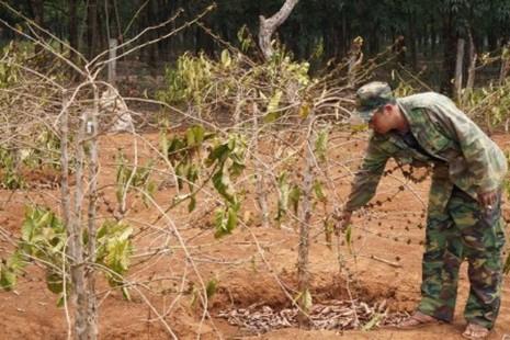 Đắk Lắk trích ngân sách khoan giếng giúp dân chống hạn - ảnh 4