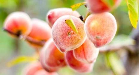 5 loại trái cây tốt nhất cho sức khỏe trong mùa mưa  - ảnh 1