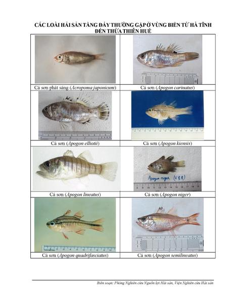 154 loại hải sản miền Trung khuyến cáo chưa được ăn - ảnh 1