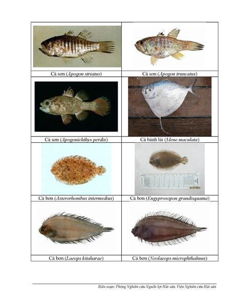 154 loại hải sản miền Trung khuyến cáo chưa được ăn - ảnh 2