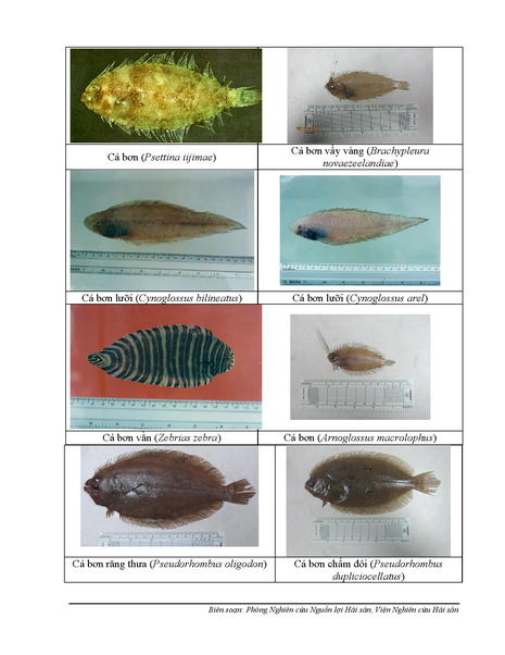 154 loại hải sản miền Trung khuyến cáo chưa được ăn-P2 - ảnh 1