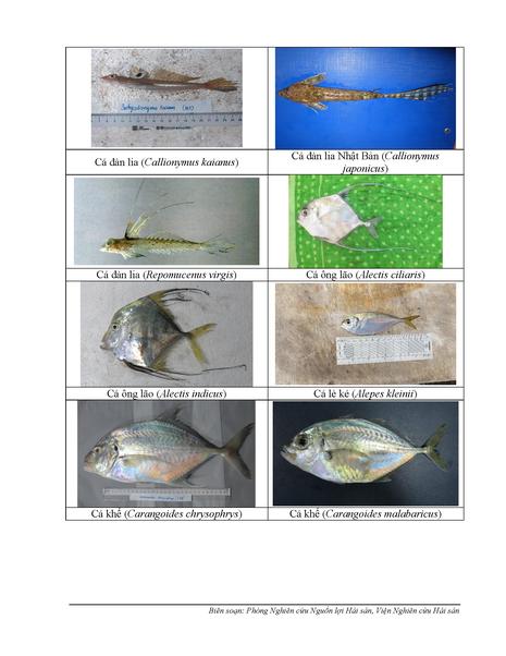 154 loại hải sản miền Trung khuyến cáo chưa được ăn-P2 - ảnh 2
