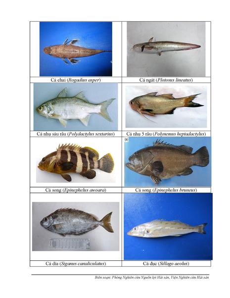 154 loại hải sản miền Trung khuyến cáo chưa được ăn-P4 - ảnh 1